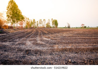 Dry Farm With Warm Light, Dry Field, Dry Farm