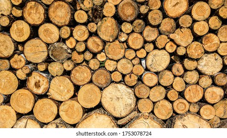 Dry felled logs stacked on top of each other. Firewood is on the heap. Sawn trees piled by a wall. Harvested logs for the fireplace. Wooden logs of different sizes are prepared for the winter.