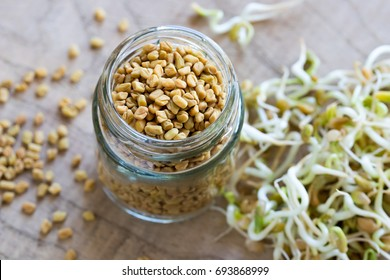 Dry fenugreek seeds in a glass jar, with sprouted fenugreek in the background