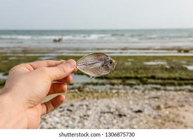 Dry fish in beach.