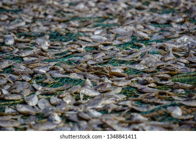 Dry fish in Mannar