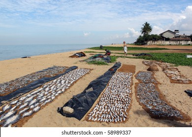 Dry fish on the beach in Sri Lanka