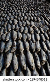 Dry fish processed area beside of karnafuli river in chittagong