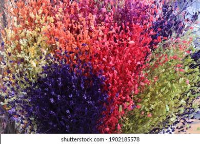 Dry Flowering ornamental plants. chromatic dry flowers