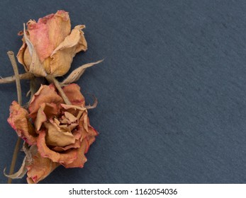 dry flowers background