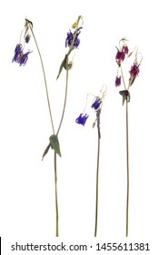 dry flowers isolated on white background