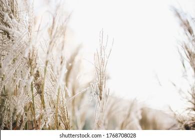 Dry flowers light beige background