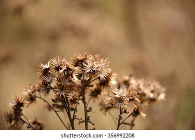 Dry flowers in nature