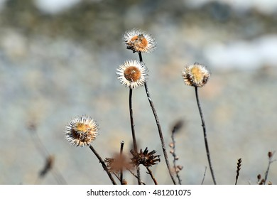 dry flowers on a cliff above the sea