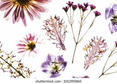 dry flowers on the white background