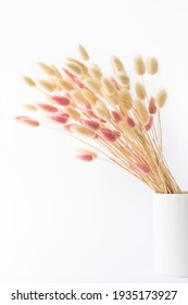 Dry flowers in a vase on a white background.