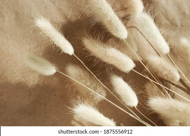 Dry fluffy bunny tails grass Lagurus Ovatus flowers on beige background. poster