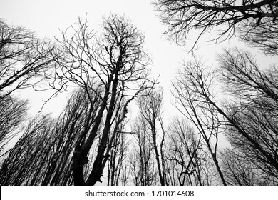 A dry forest black and white view
