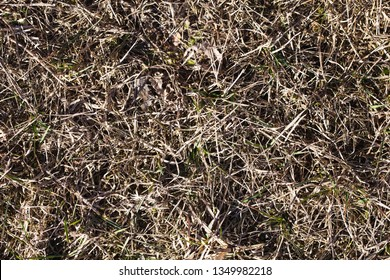 Dry forest ground grass and fallen tree needles texture.