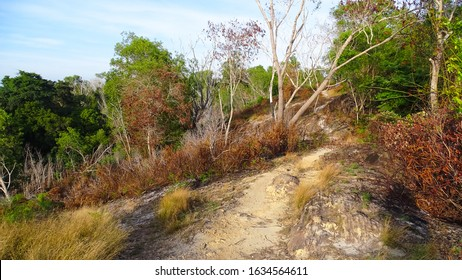 Dry forest near Kubong hills,Labuan island,Malaysia in March, drought in dry dipterocarp forest and mixed forest.Climate change increases risk of these forest fires.