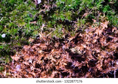 Dry and fresh moss