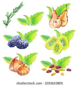 Dry fruits and mint leaves compositions drawn with color pencil in realistic style. Isolated on white background.