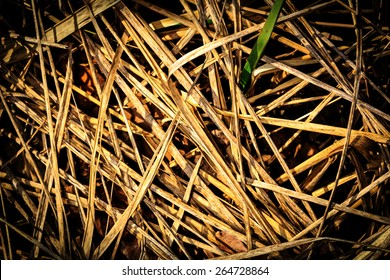 Dry grass abstract natural background