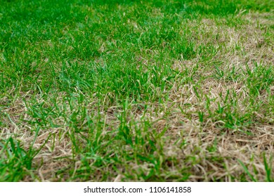 Dry Grass after period without rain