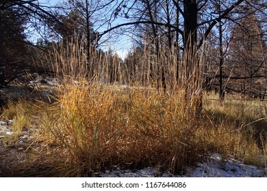 Dry grass along the Crooked River trail,Redmond, Oregon