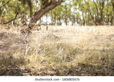 Dry grass in Australian bush land with soft green tones. Background nature image with copy space.