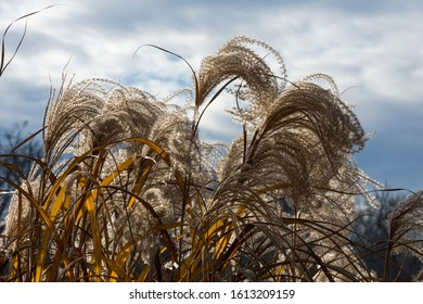 Dry grass and blue sky with clouds