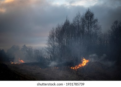 Dry grass burning in the forest and meadows, evening sunset