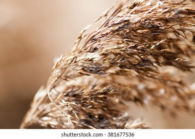 Dry grass closeup. Photo toned in vintage style
