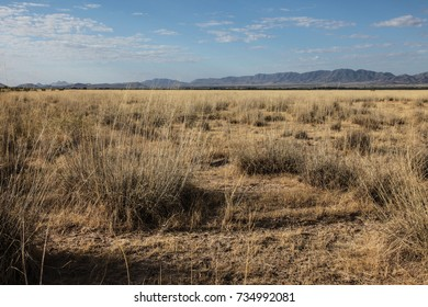 Dry grass clumps in poor soil/Clumps of Desert Grasses in Poor Ground/Grassy clumps in arid landscape