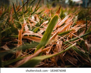 Dry Grass during the Fall season