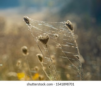 Dry grass entwined with cobwebs in the sunlight on a meadow. Autumn season, October. Web template for design.