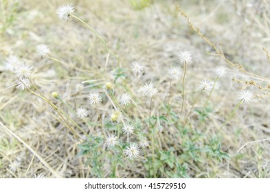Dry grass field background