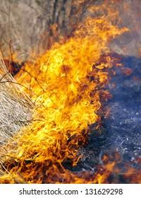 Dry grass in  field burns dangerously