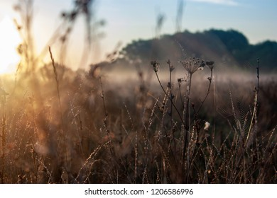Dry grass in the field at dawn with big shining sun. Silhouette of plants against the background of dawn in summer