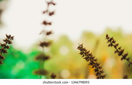 dry grass flower with colorful bokeh background