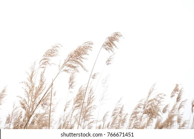 Dry grass flower with the wind