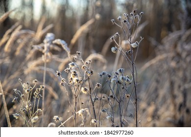 Dry grass and flowers covered with frost on a Sunny autumn day in the field