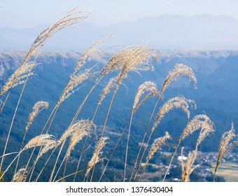 Dry grass growing at the north rim of Aso volcanic caldera in Aso-Kuju National Park - Kumamoto prefecture, Japan