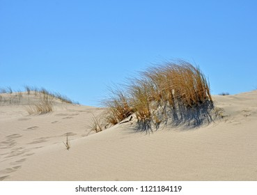 Dry grass. Natural, sandy Parnidis dune near Nida resort town. Curonian Spit - UNESCO World Heritage Site
