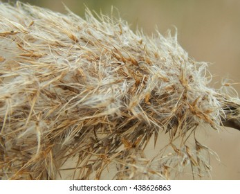 Dry grass near a wetland marsh in autumn