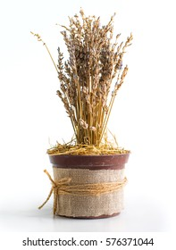 dry grass in a pot
