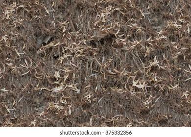 dry grass seamless texture