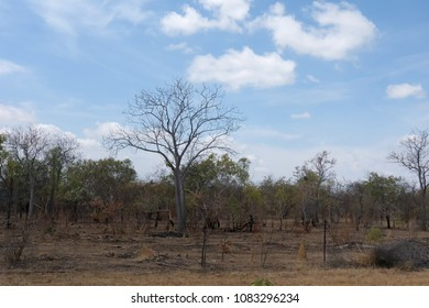 Dry grass and termite mounds in the rural landscape near Normanton on outback Queensland, Australia