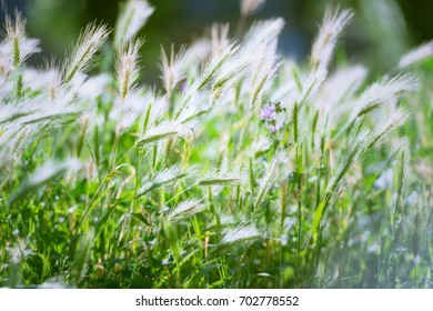 Dry grass, texture. Beautiful herbal background. Herbal ears