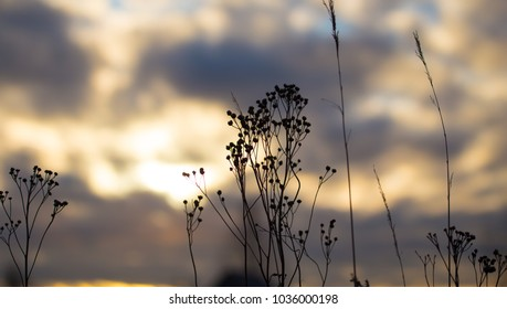 Dry grass of a tree in the rays of sunset