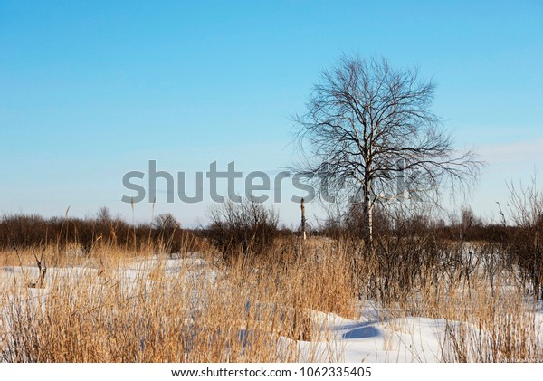 Dry grass and trees without leaves under the blue sky