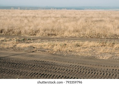 dry grass in a wild field. the concept of environmental protection and ecology in the area