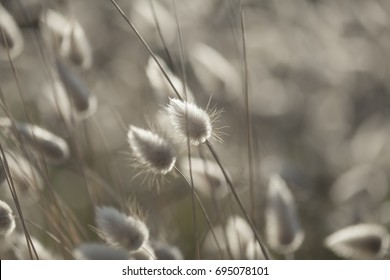 dry grasses with conical seedheads natural macro background