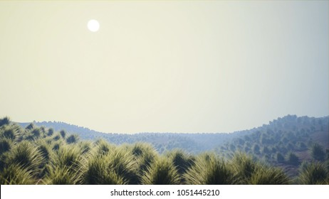 Dry Grassfield Arid Landscape in Strong Morning Haze
