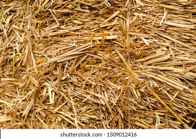 Dry grass-straw. Background for your design. Rustic style. Autumn